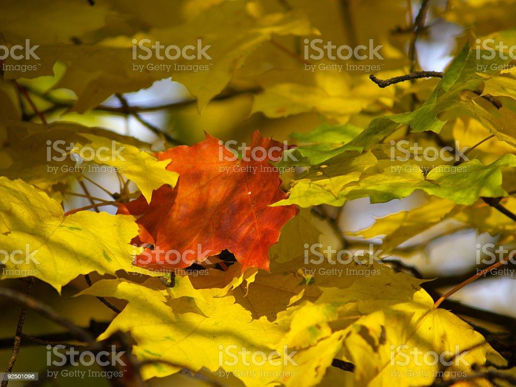 Autumn [15] royalty-free stock photo