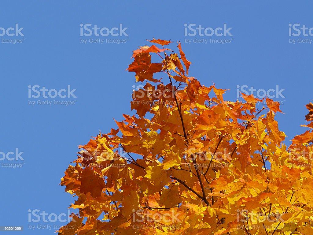 Autumn [7] royalty-free stock photo