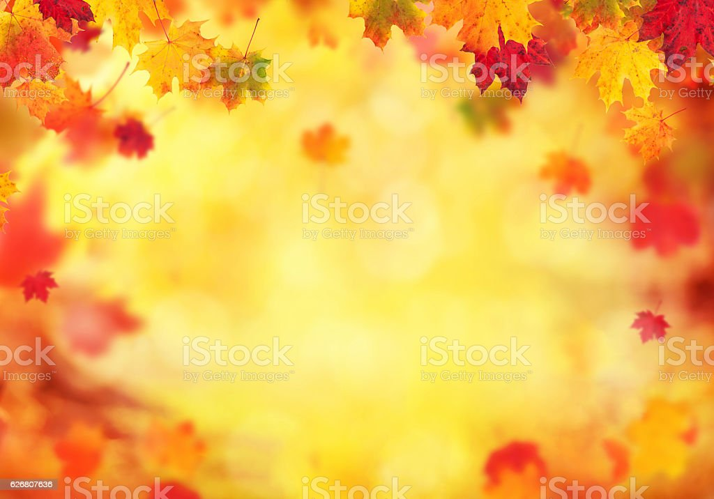 Autumn abstract background with falling leaves stock photo