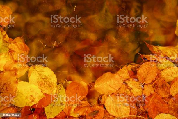 Autumn abstract background yellow fallen leaves in water picture id1056019662?b=1&k=6&m=1056019662&s=612x612&h=krw8pi3bzo1 tghtyt1riu7 f2nz6c5sanilyij2vnu=