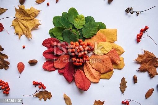 istock Autumn abstract design. 1162351137