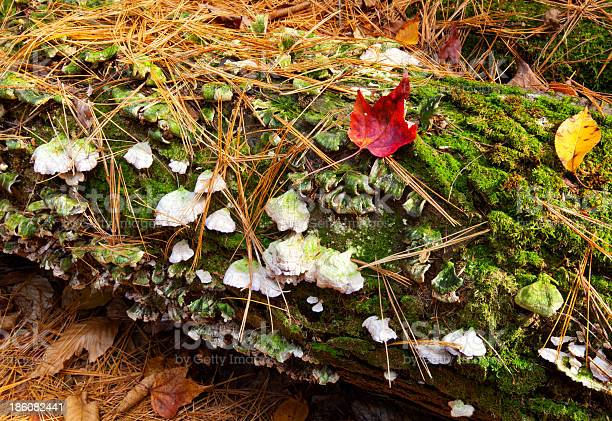 Photo of Autumn Abstract