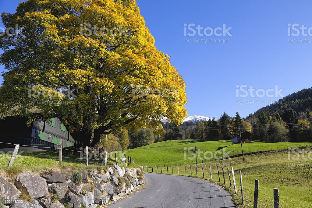 Autumn afternoon in Switzerland with foliage and pastures royalty-free stock photo