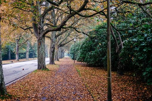 Autumn alley in Ohlsdorf