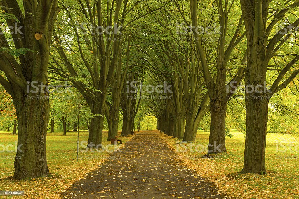 Autumn Alley in the Park stock photo