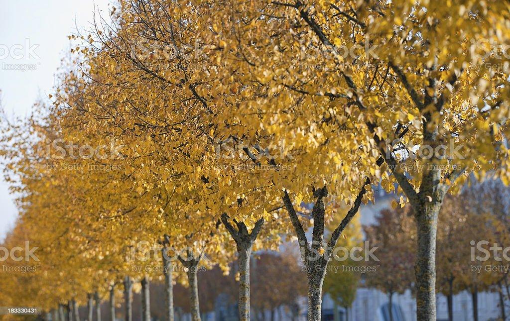 Herbst Gasse (XXXL – Foto