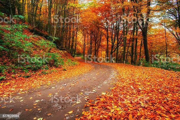 Photo of autumn alley