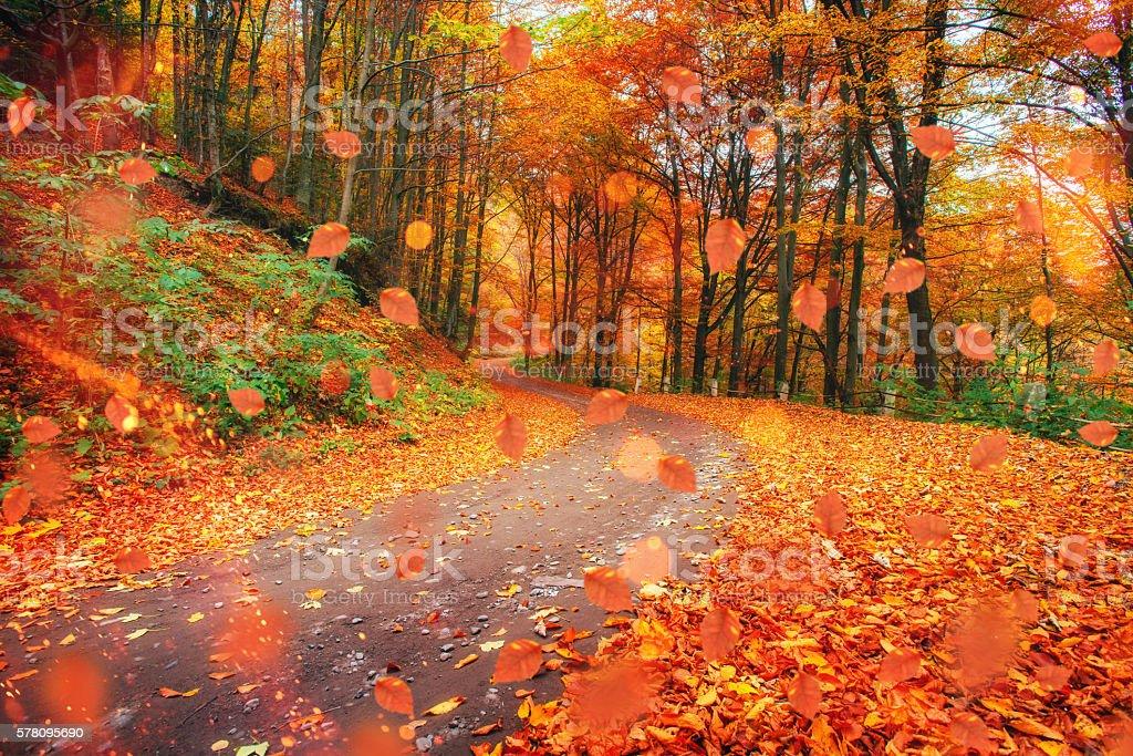 autumn alley. Sunlight breaks through the autumn leaves of trees – Foto