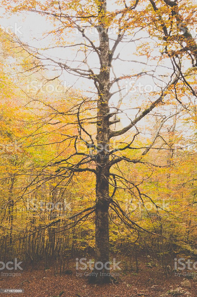 Autumn and Forest with a Big Tree royalty-free stock photo