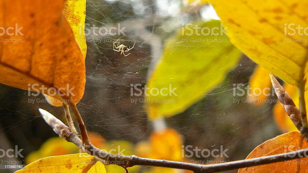 autumn and spider royalty-free stock photo