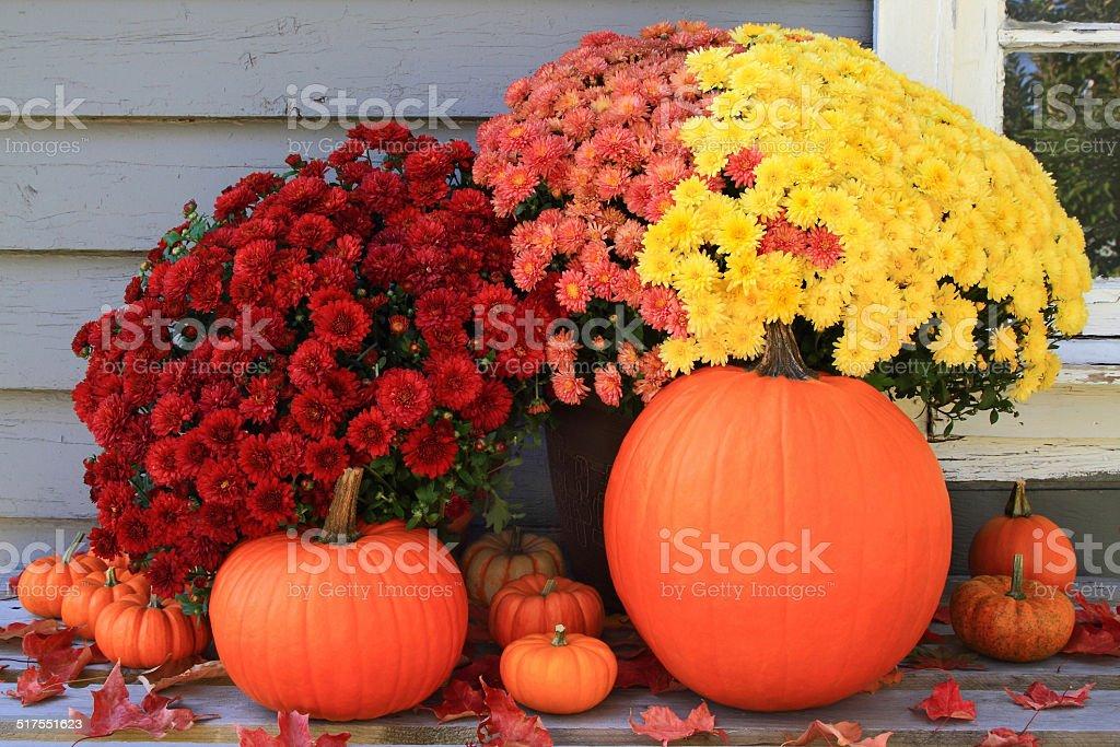 Autumn and Thanksgiving decoration stock photo