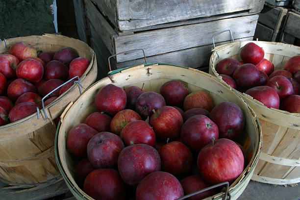 Herbst Apple Tragekörbe – Foto
