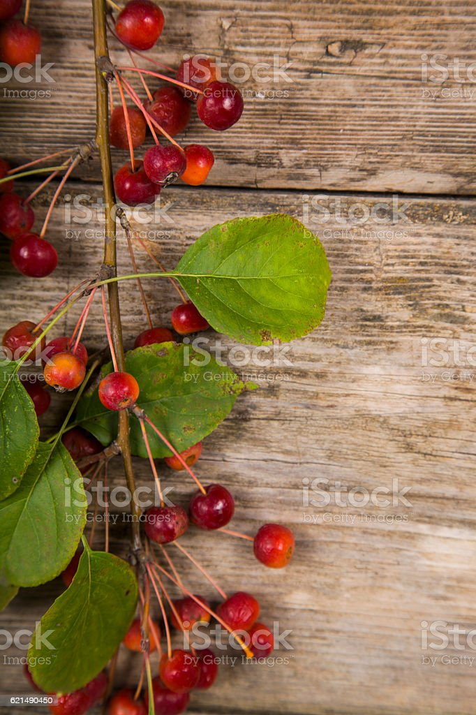 Autumn apples on a wooden background foto stock royalty-free