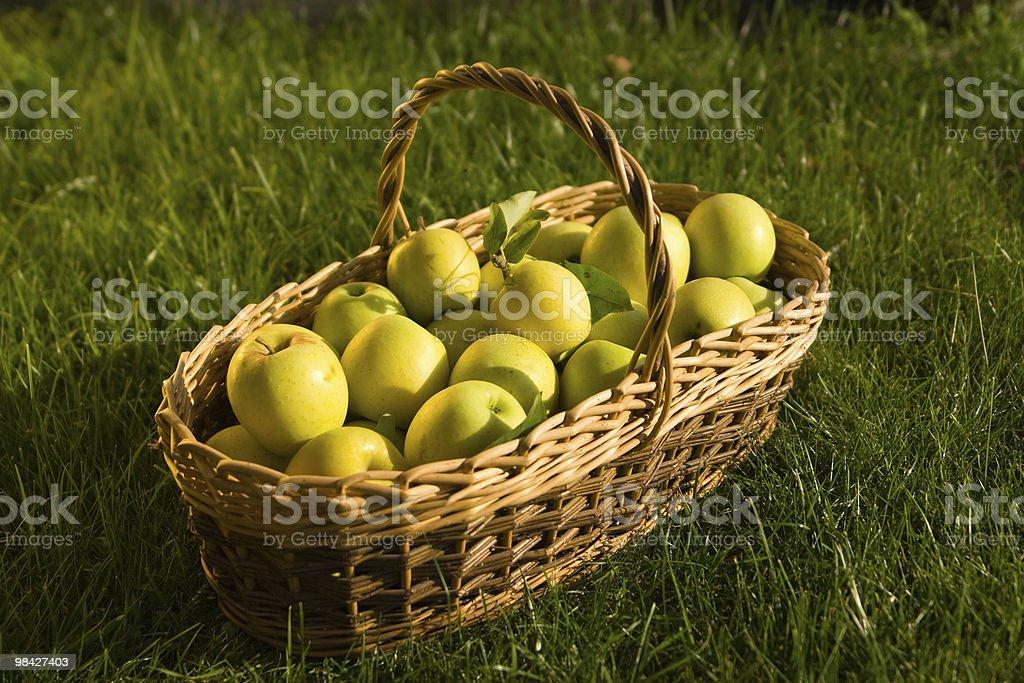 Autumn Apples royalty-free stock photo