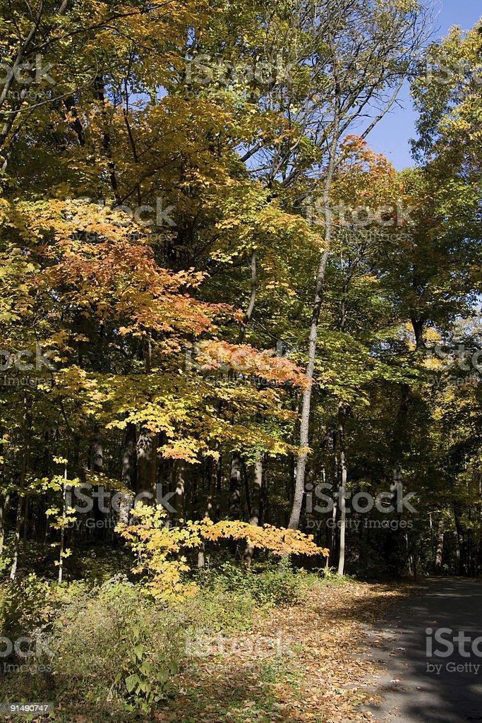 Autumn arboretum stock photo