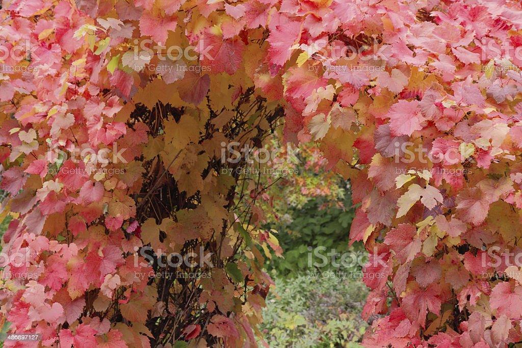 Autumn archway stock photo