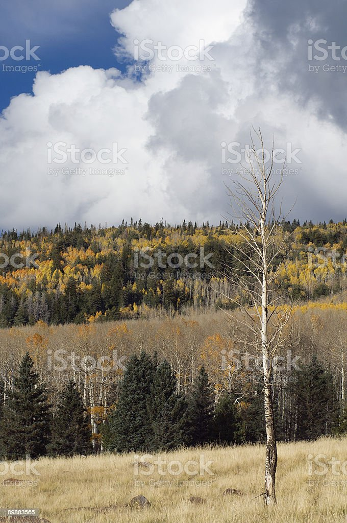 Autumn Arrival royalty-free stock photo