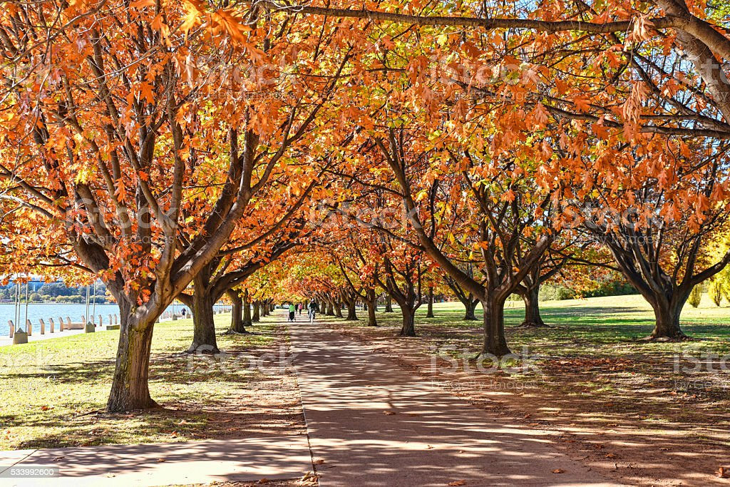 Autumn arrives in Canberra, trees become multicolored around the lake stock photo