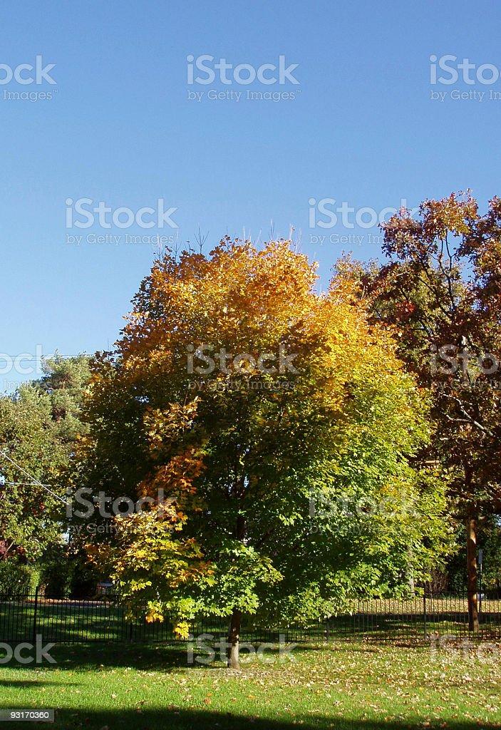 Autumn Art royalty-free stock photo