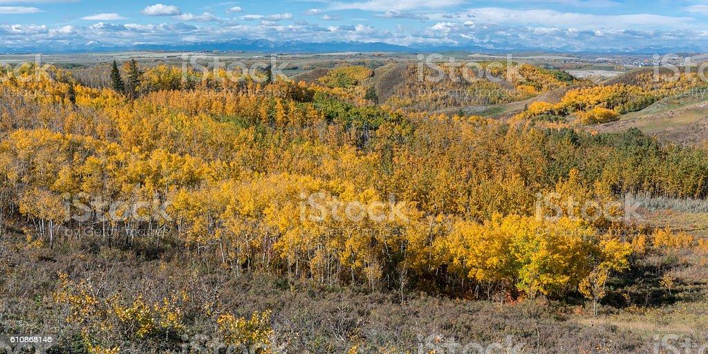 Autumn Aspen Forest at Glenbow Ranch, Calgary stock photo