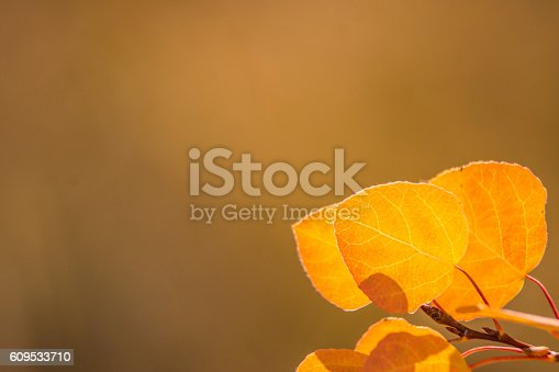 A close-up photo of autumn aspen leaves with a bokeh background