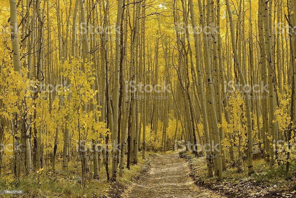 Otoño Aspen Trail Horizontal - foto de stock