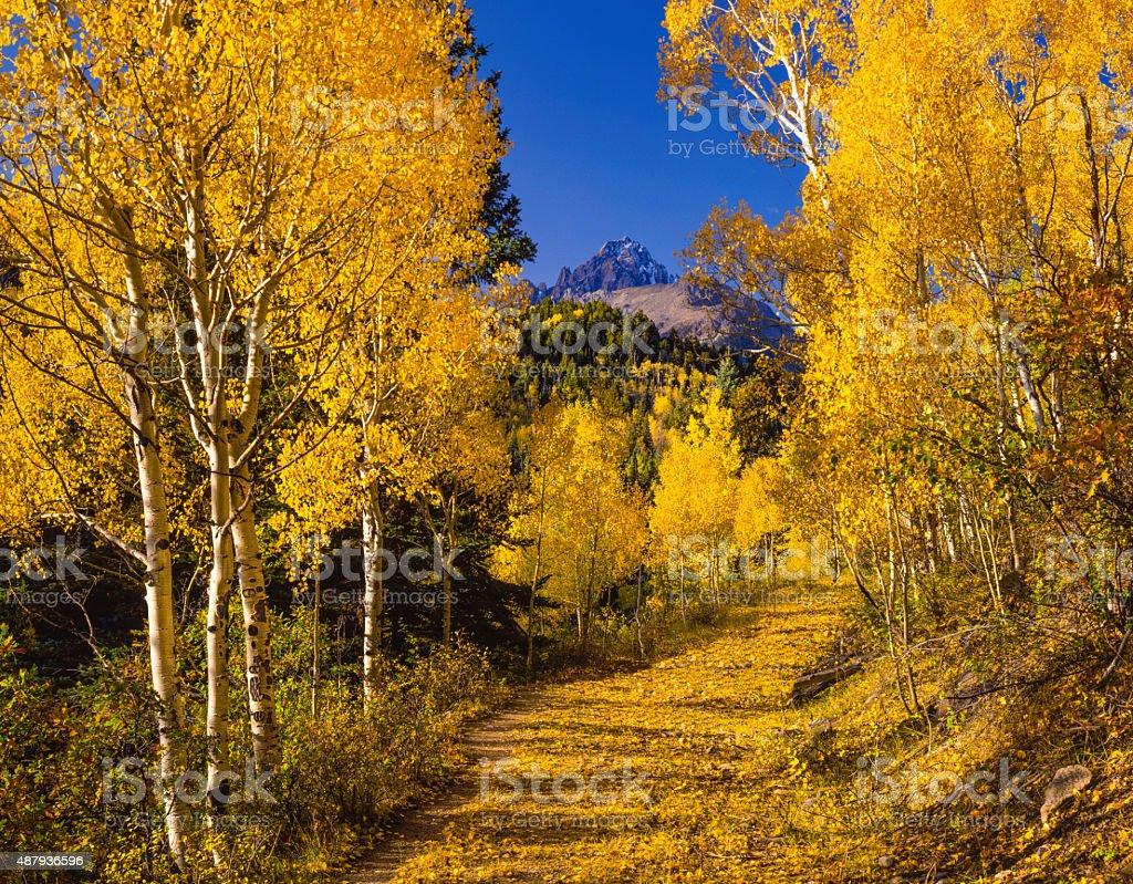 Autumn Aspen Trees in the Rocky Mountain,Mt.Sneffels,CO stock photo