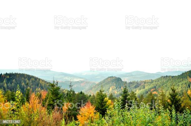Photo of Autumn Aspen trees with foggy mountains in the background