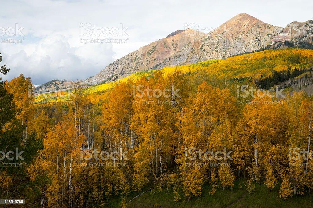Autumn Aspens in the Colorado Rockies stock photo