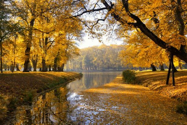 Herbst im Hinterhof und Garten. Natur Hintergrund mit bunten Bäumen am Sonnentag – Foto
