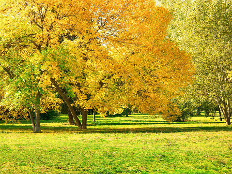 Autumn at backyard and garden. Nature background with colorful trees at sunny day