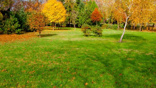 autumn at backyard stock photo