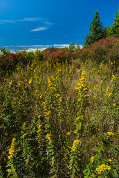Autumn at Black Balsam, Pisgah National Forest, NC stock photo