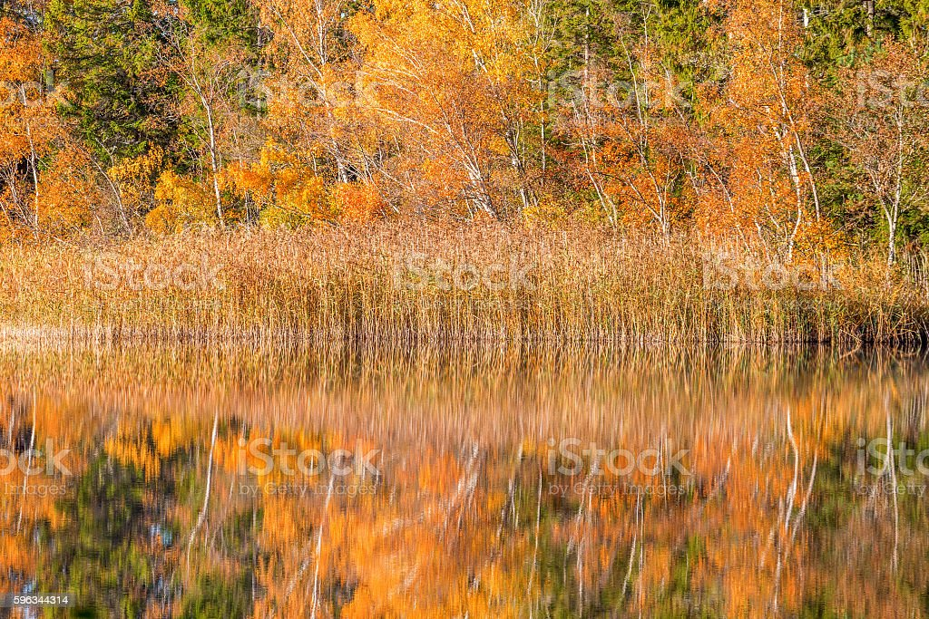 Autumn at the forest lake, reflections in the water Lizenzfreies stock-foto