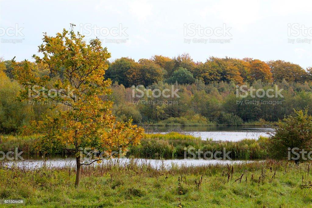 Autunno al lago foto stock royalty-free