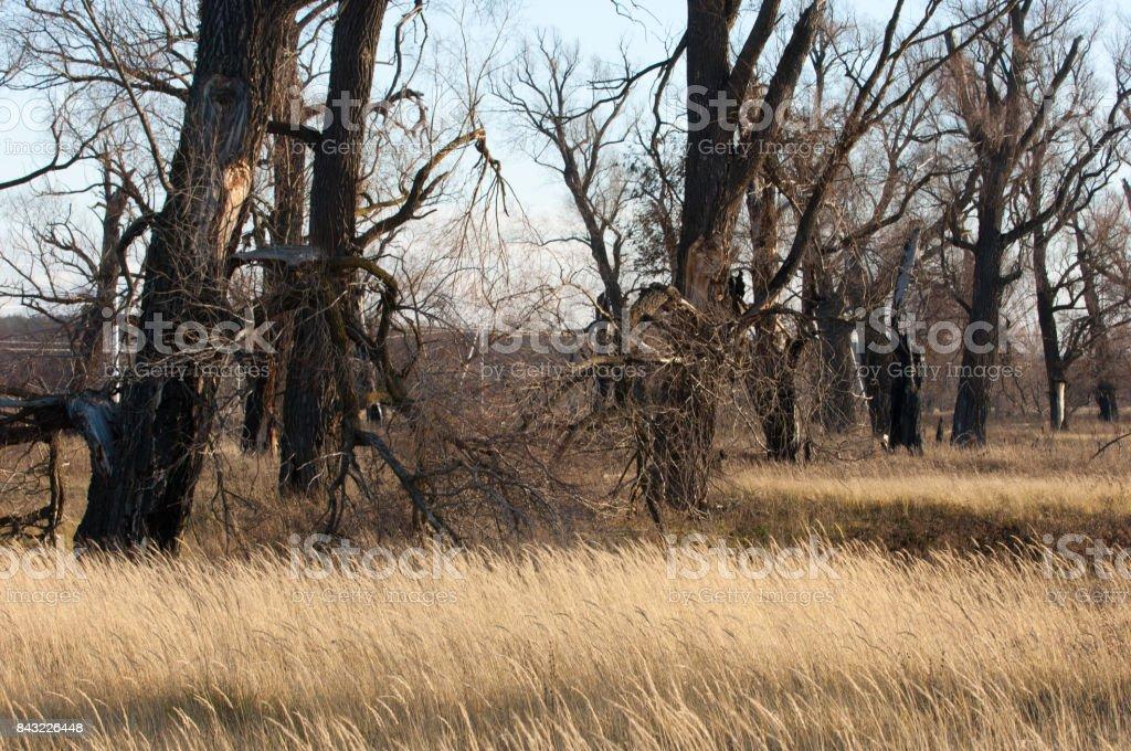 foto de Photo libre de droit de Automne Dans Le Parc Forêt Paysage Fond ...
