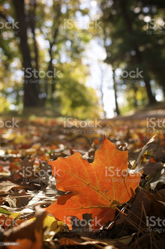 Autumn at the park royalty-free stock photo