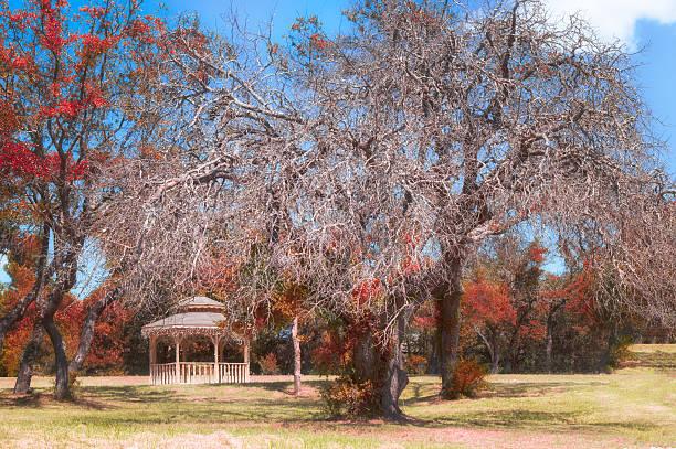 Autumn at the Park stock photo