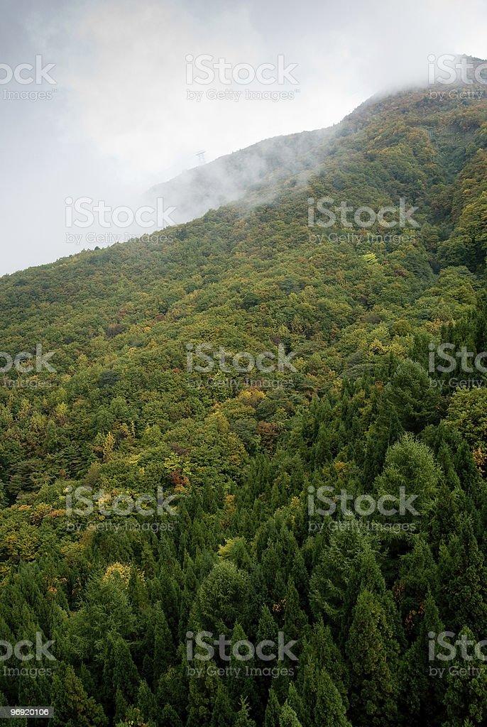 Autumn at Zao royalty-free stock photo