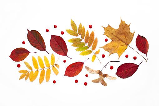 istock Autumn background. Autumn leaves and rowan berries. Autumn decor on a white background. Flatlay 1173587616