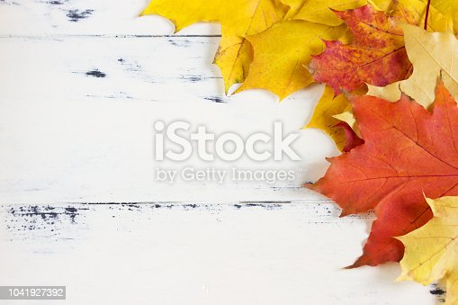 istock Autumn background. Autumn yellow and red  leaves  on white  wooden board. 1041927392