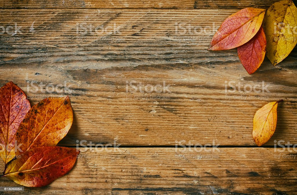 autumn background branches with colorful leaves closeup stock photo