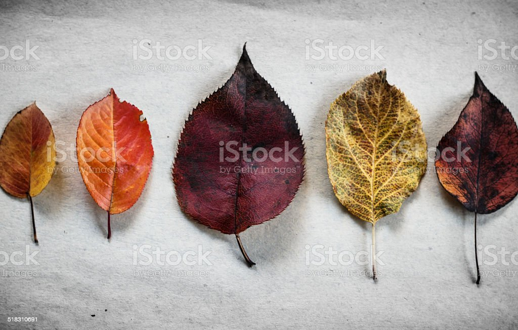 Autumn background. Colored leaves. stock photo