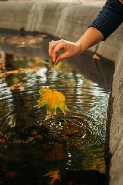Autumn background, Fall its coming, Hello autumn, Things to come, Beautiful fall. Female Hand holds maple yellow leaf on the background water in the fountain Autumn background, Fall its coming, Hello autumn, Things to come, Beautiful fall. Female Hand holds maple yellow leaf on the background water in the fountain. affective stock pictures, royalty-free photos & images