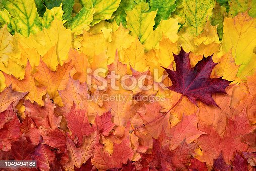 The composition of multi-colored leaves with a smooth color transition.