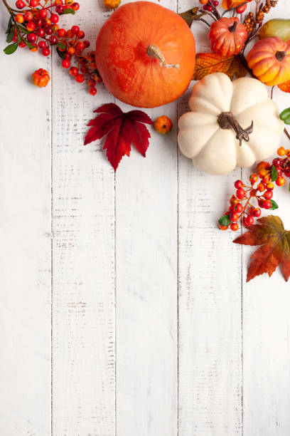 Autumn background from fallen leaves and pumpkins on wooden vintage table Festive autumn decor from pumpkins, berries and leaves on a white  wooden background. Concept of Thanksgiving day or Halloween. Flat lay autumn composition with copy space. fall background stock pictures, royalty-free photos & images