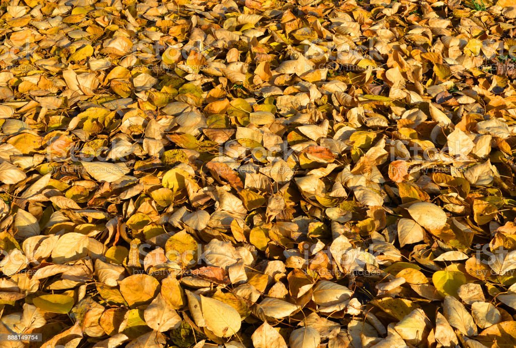 Autumn background made of fallen autumn leaves. stock photo
