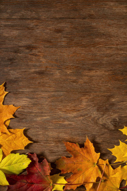 Autumn background Autumn background fall background stock pictures, royalty-free photos & images