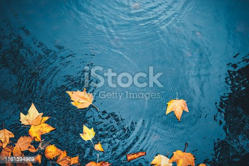 Dry autumn leaves floating on a water surface of a lake.