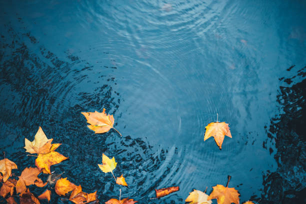 Autumn Background Dry autumn leaves floating on a water surface of a lake. lake stock pictures, royalty-free photos & images